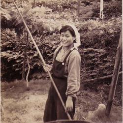 昭和35年頃のぶどう作業風景