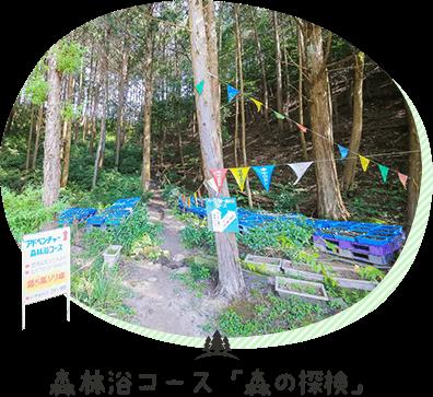 森林浴コース「森の探検」